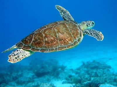 sunset beach nc sea turtles videos