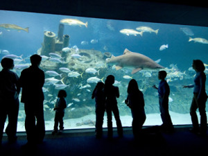 NC Aquariums Ft Fisher Vacation Activity Guide