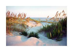 Dunes-Path-Ken-Buckner