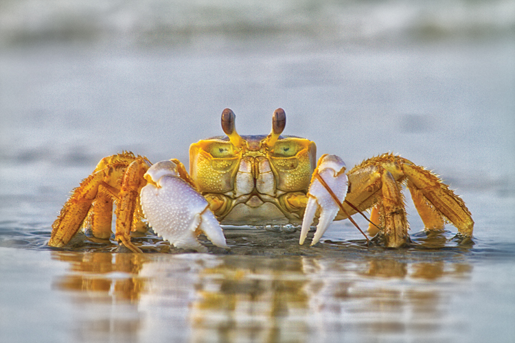 How to Fish for Crabs