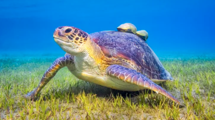 Facts-You-May-Not-Know-About-Sea-Turtles-750x420